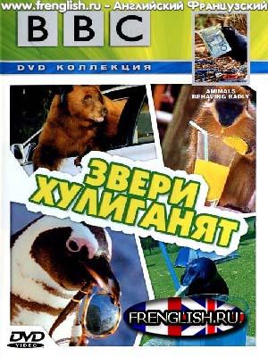 dvd диски bbc звери хулиганят: