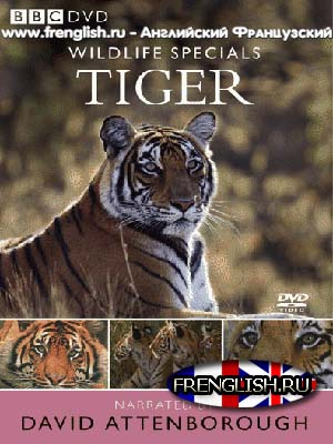 The Wildlife Specials - Tiger